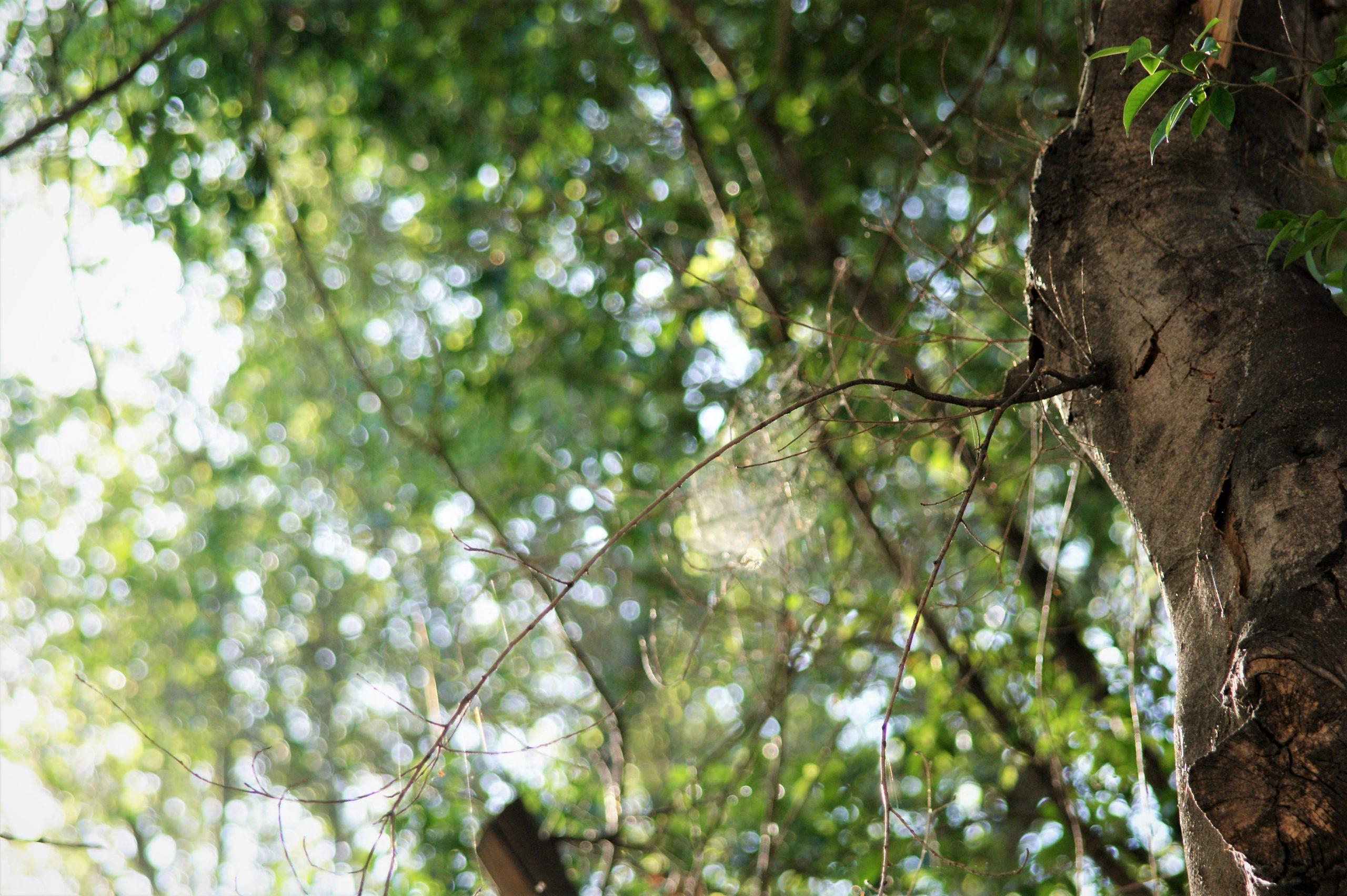 Sotto un albero vive un bosco