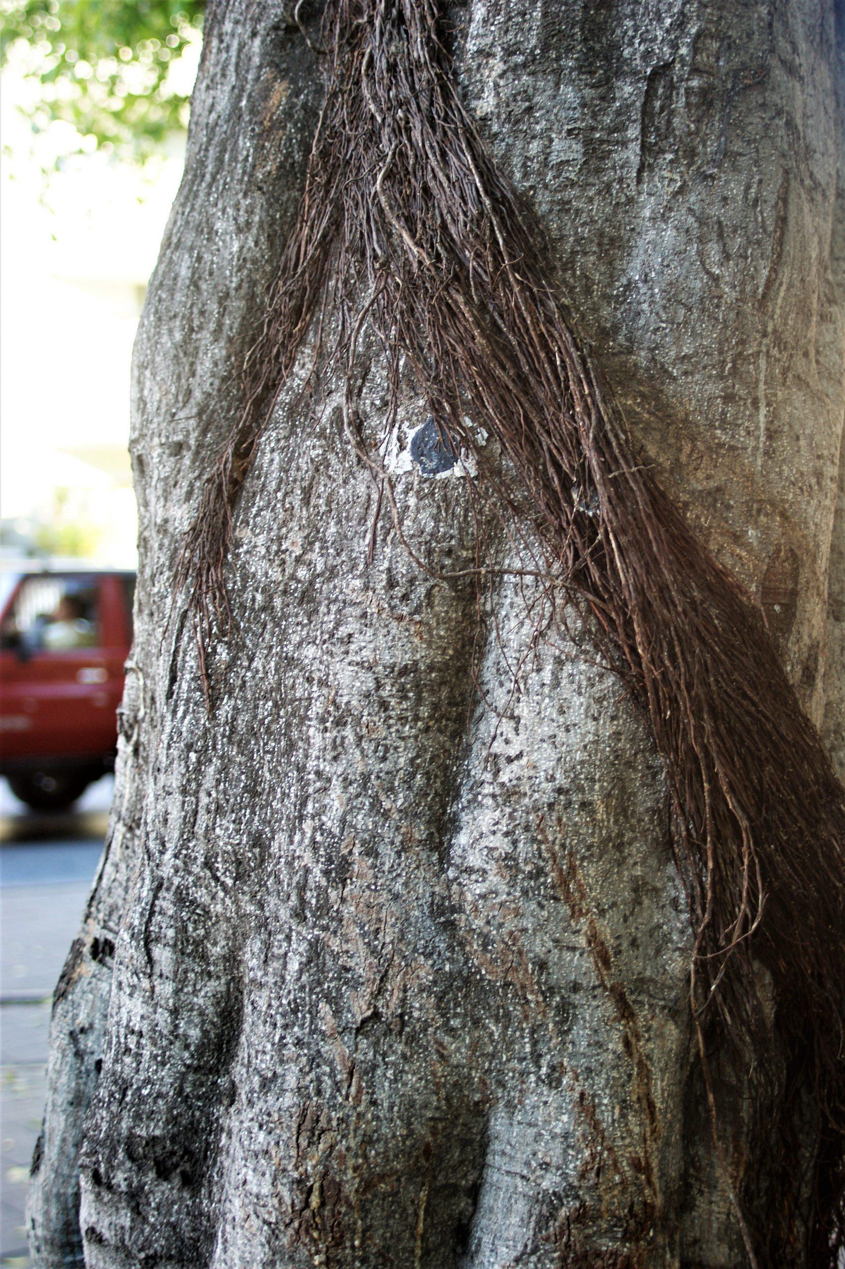 un metro quadrato di bosco imprints sicily needs love